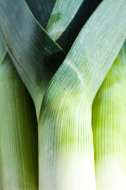 leeks_palamedes_photography_services